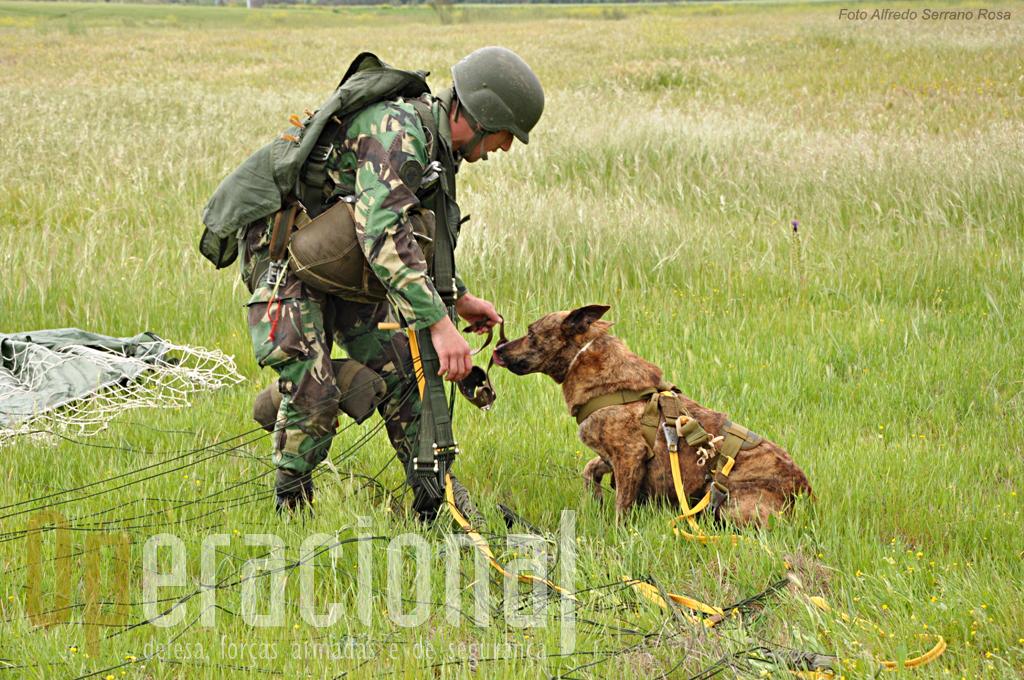 Ainda antes de se desequipar o para-quedista retira o equipamento do cão.