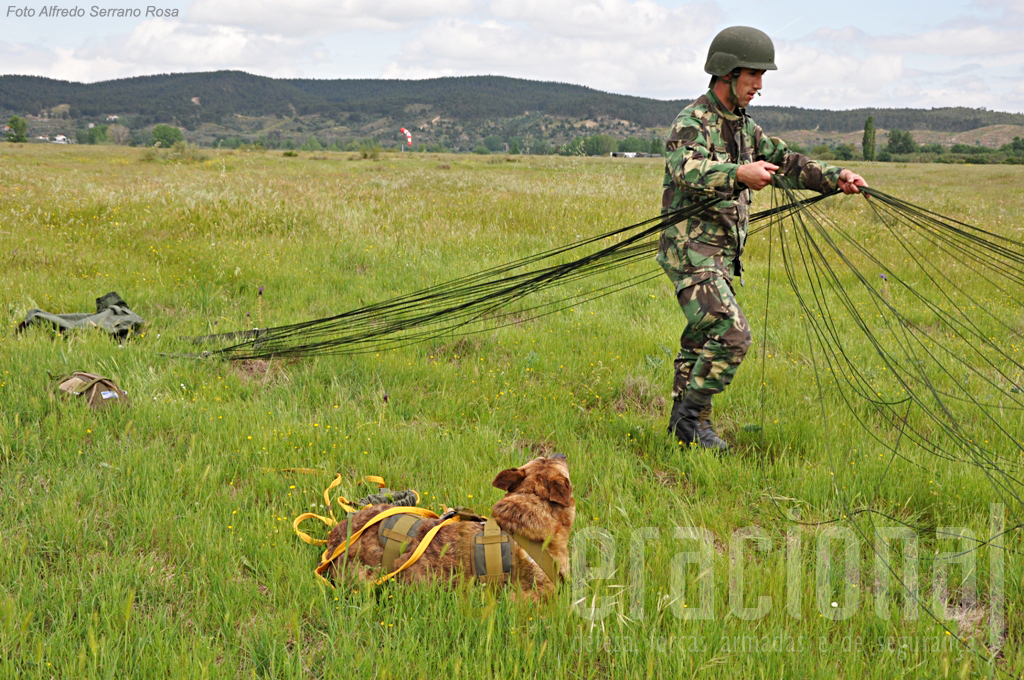 Durante a drobragem sumária do conjunto dos pára-quedas o cão mantém-se junto ao tratador.