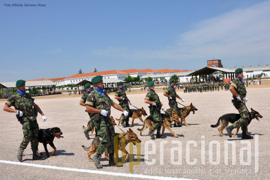 Pioneiros nesta actividade em Portugal, mesmo que hoje outras forças façam uso mais intenso dos cães militares, os pára-quedistas mantém esta valência que tantas provas tem dado.