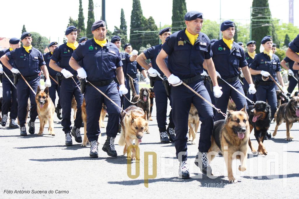 As equipas cinotécnicas da GNR que tantos serviços têm prestado à população portuguesa.