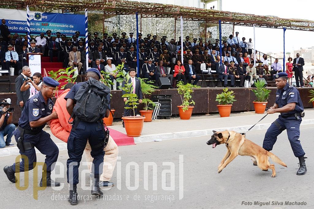 """No 143.º Aniversário da criação do Corpo de Policia em Cabo Verde, na cidade da Praia em Novembro de 2013, a demonstração de """"técnica canina"""" foi a grande surpresa. Na  tribuna o 1.º Ministro presidia à cerimónia."""
